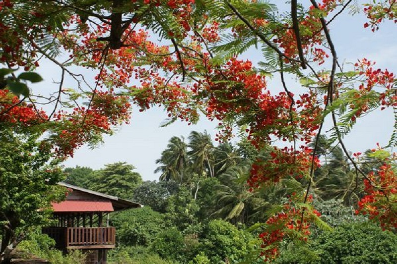 Flore de Guyane